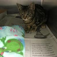 Adopt A Pet :: Armand - Miami, FL