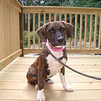 Adopt A Pet :: BryNN - LAKEVILLE, MA