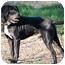 Photo 3 - Beagle Mix Dog for adoption in Bluffton, South Carolina - Gordi