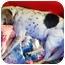 Photo 2 - Hound (Unknown Type) Mix Dog for adoption in Chesapeake, Virginia - Gabby