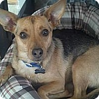Adopt A Pet :: Roo - PENDING, in Maine - kennebunkport, ME