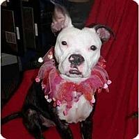Adopt A Pet :: Dominique - Auburn, CA