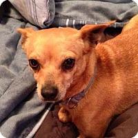 Adopt A Pet :: Roo - Alliance, NE