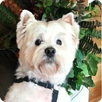 Adopt A Pet :: BABBS - GARRETT, IN