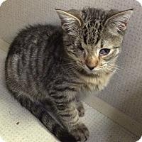 Adopt A Pet :: Bo - New York, NY