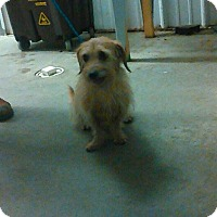 Adopt A Pet :: Barnaby - Clarksville, TN
