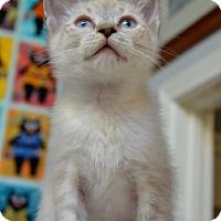 Adopt A Pet :: Thomas Von Tussle - Davis, CA