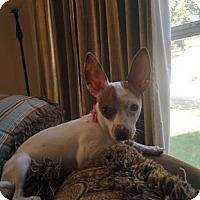 Adopt A Pet :: Bunny - San Antonio, TX