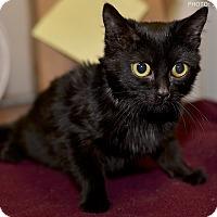 Adopt A Pet :: Bee - Medina, OH