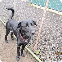Adopt A Pet :: Maya - Tillamook, OR