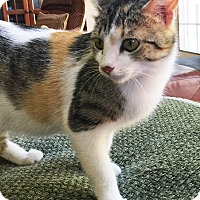 Adopt A Pet :: Daisy - Mt. Prospect, IL