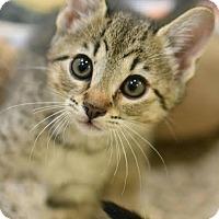 Adopt A Pet :: Angel - Aiken, SC