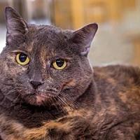 Adopt A Pet :: Lili - Palm Springs, CA