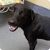 Adopt A Pet :: Ranger - Elmwood Park, NJ