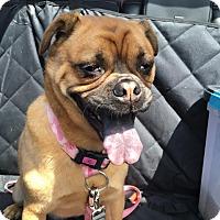 Adopt A Pet :: Chyna - Columbus, OH