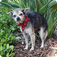 Adopt A Pet :: Joey - Rancho Palos Verdes, CA
