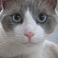 Adopt A Pet :: HANSOME - Brea, CA