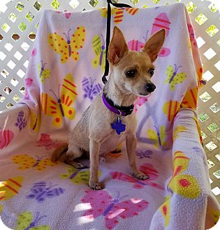 Terrier (Unknown Type, Small) Mix Dog for adoption in San Antonio, Texas - Jenks