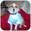Photo 2 - Jack Russell Terrier/Wirehaired Fox Terrier Mix Puppy for adoption in Culver City, California - Emily