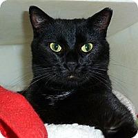 Adopt A Pet :: Brigid - Carmel, NY