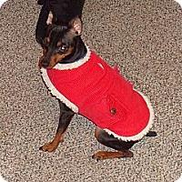 Adopt A Pet :: Sadie - Malaga, NJ