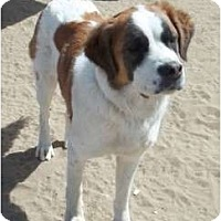 Adopt A Pet :: Lady - Sparks, NV