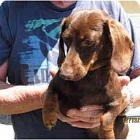 Adopt A Pet :: Coco Puff - Garden Grove, CA