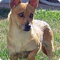 Adopt A Pet :: Tangerine - Oakley, CA