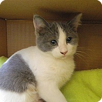 Adopt A Pet :: Sweet Pea - The Colony, TX