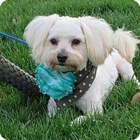 Adopt A Pet :: **KIRBY** - Stockton, CA