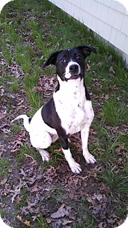Pointer Mix Dog for adoption in Peace Dale, Rhode Island - Dolly