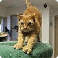 Adopt A Pet :: Scottie - Chesapeake, VA