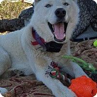 Adopt A Pet :: Royce - Van Nuys, CA