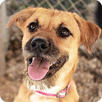 Retriever (Unknown Type)/Terrier (Unknown Type, Medium) Mix Puppy for adoption in Waco, Texas - Whitney