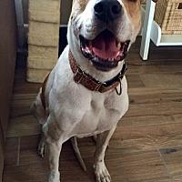 Adopt A Pet :: Winslow - Tucson, AZ