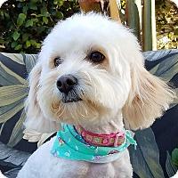 Adopt A Pet :: Buttercup - San Diego, CA