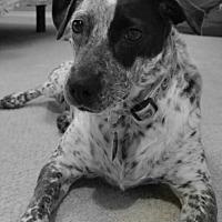 Adopt A Pet :: Lennox - Denver, CO