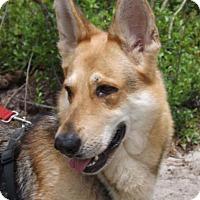 Adopt A Pet :: Cheyenne - Citrus Springs, FL