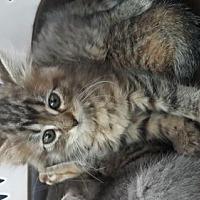 Adopt A Pet :: Lyn - Los Angeles, CA