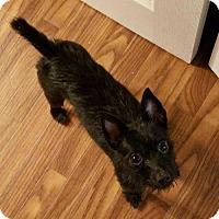 Adopt A Pet :: Juno! - Los Angeles, CA