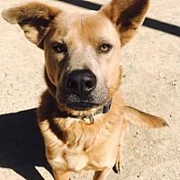 Adopt A Pet :: DEXTER - Southampton, NY