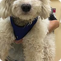 Adopt A Pet :: Burbu - Thousand Oaks, CA