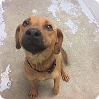 Adopt A Pet :: Carmelo Anthony - Jersey City, NJ