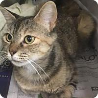Adopt A Pet :: Sasha - Gulfport, MS