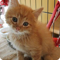 Adopt A Pet :: Chuckie - Crossville, TN