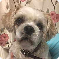 Adopt A Pet :: Gloria - Kansas city, MO