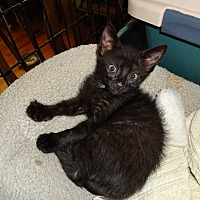 Adopt A Pet :: Dodger - Central Islip, NY