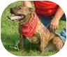 Pit Bull Terrier Mix Dog for adoption in Yorkville, Tennessee - Tiger