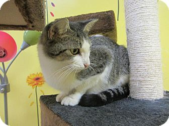 Domestic Shorthair Cat for adoption in Mobile, Alabama - Emerald