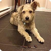 Adopt A Pet :: Romeo - Adoption Pending - Vancouver, BC